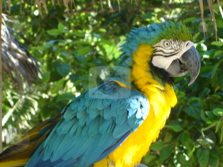 Parrot In The Wild stock photo,  by Ritu Jethani
