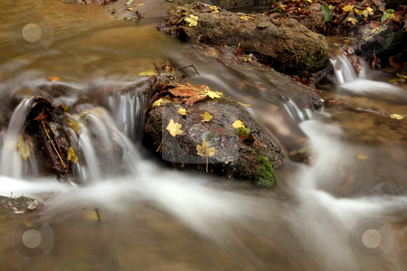 Creek in the forest in Autumn stock photo, Creek in the forest in Autumn by Fesus Robert
