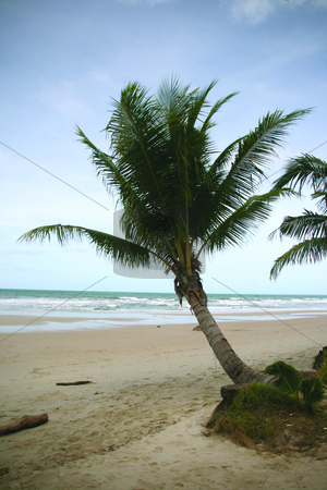 Palm tree by the sea stock photo, Palm tree by the sea by EVANGELOS THOMAIDIS