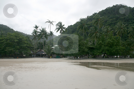 Coconut trees  stock photo, Coconut trees koh chang island white sand beach by EVANGELOS THOMAIDIS