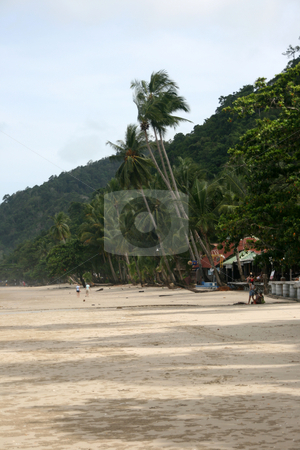 Coconuts on the beach stock photo, Coconut trees on the beach in koh chang island thailand by EVANGELOS THOMAIDIS
