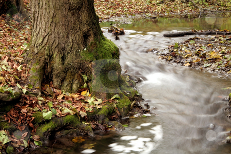Autumn  forest with river stock photo, autumn colors in the forest by Fesus Robert