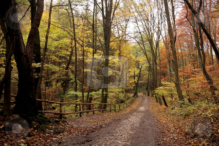 Trail in autumn  forest stock photo, autumn colors in the forest by Fesus Robert
