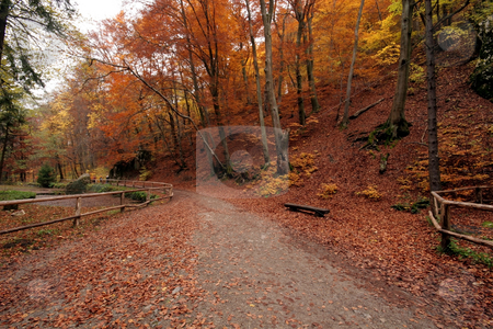 Autumn  forest stock photo, autumn colors in the forest by Fesus Robert