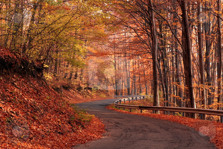 Hiking trail in autumn  forest stock photo, autumn colors in the forest by Fesus Robert