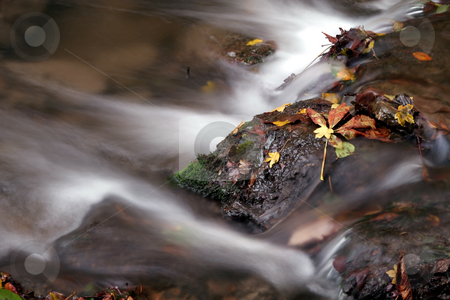 Time lapse river autumn  forest stock photo, autumn colors in the forest by Fesus Robert