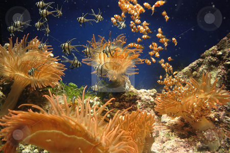 Fish kindergarten stock photo, Small fishes among colorful corals by Natalia Macheda