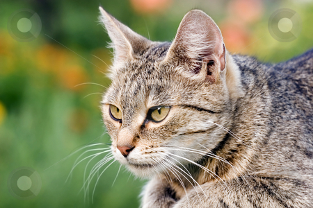 Cat side profile stock photo, Cat outdoors by Fesus Robert