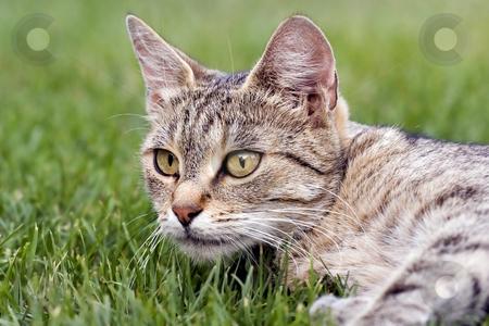Cat lying in grass stock photo, Cat in outdoor by Fesus Robert