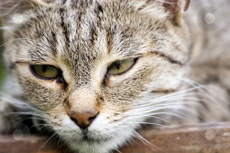Tired cat stock photo, Cat in outdoor by Fesus Robert