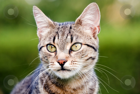 Cat staring stock photo, Cat in outdoor by Fesus Robert