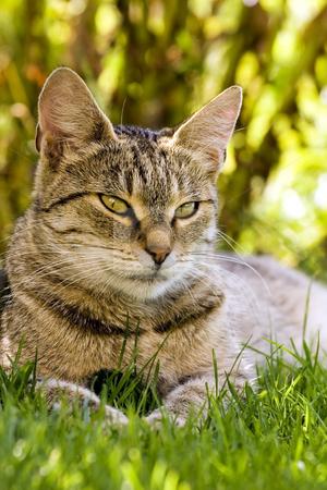 Cat resting in grass stock photo, Cat in outdoor by Fesus Robert