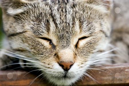 Sleeping cat stock photo, Cat sleeping by Fesus Robert