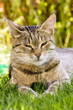 Cat in outdoor stock photo, Cat in outdoor by Fesus Robert