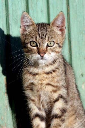 Cat in outdoor stock photo, Cat in outdoor by Fesus Robert