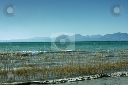 Lake Garda stock photo, Lake Garda with mountains on the background and reed on the foreground by Natalia Macheda