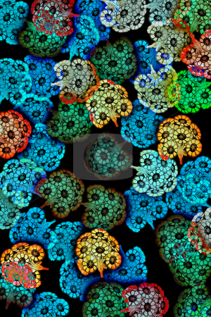 Pattern with flowers stock photo, Transparent flowers textured on black background by Wino Evertz