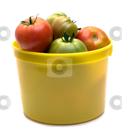 Picked Tomatoes stock photo, A pail of freshly picked tomatoes, isolated on a white background by Richard Nelson