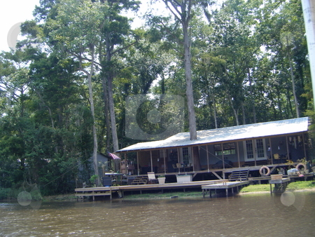 A Tree Growing Through a House stock photo, A picture of a house with tree growing through it, this picture was taken on a boat whilst on the New Orleans swamp, quite a funny/ weird picture. Thanks by David Robinson