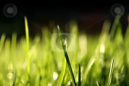 Blurry grass blades stock photo, Grass blades, 100% black on top by Tilo