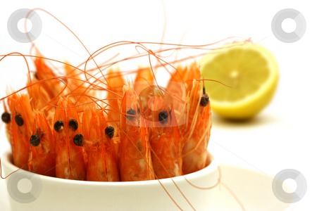 Shrimps in a bowl stock photo, Tiny bowl full of shrimps, antenna and head in the air, isolated on white by Tilo