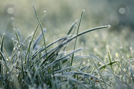 Frozen grass stock photo, Grass with white frost in first morning light by Tilo
