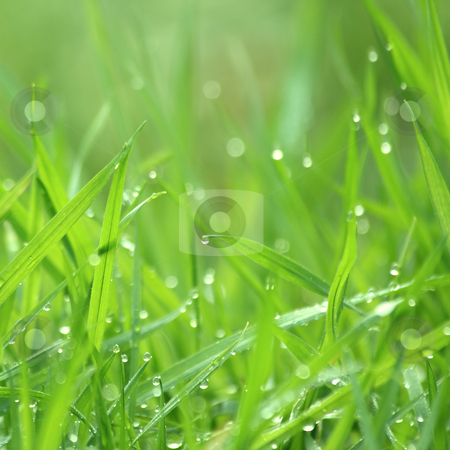 Drippy grass stock photo, Drippy grass background, swallow depth of field by Tilo