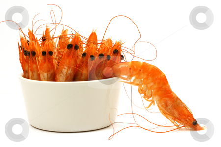 Shrimp escape stock photo, Tiny bowl full of shrimps, antenna and head in the air, one shrimp escapes. Isolated on white. by Tilo