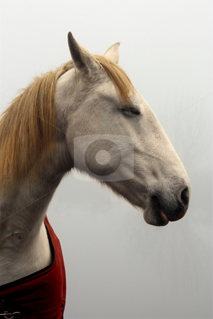 Dreaming Horse stock photo, Horse with closed eyes, dreaming by Tilo