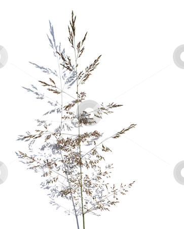 Grass over shadow stock photo, Grass and shadow over white by Tilo