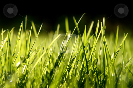 Grass blades stock photo, Grass blades, 100% black on top by Tilo