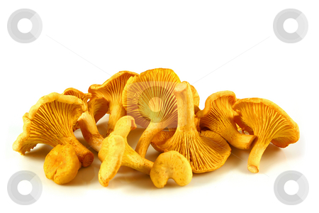 Chanterelles isolated stock photo, Chanterelles isolated on white, delicious mushroom by Tilo