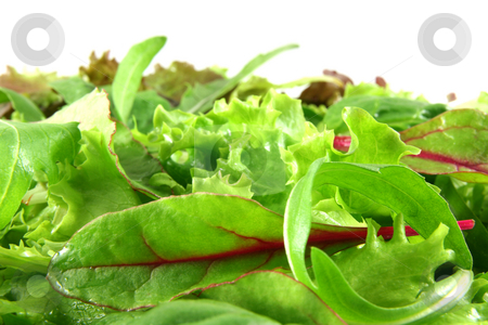 Fresh mixed lettuces, horizontal stock photo, Mixed lettuces closeup, white background at the top. by Tilo