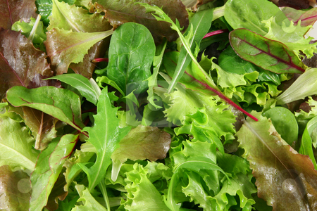 Fresh mixed lettuces, top view stock photo, Mixed lettuces closeup by Tilo