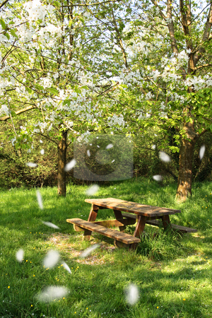 Spring picnic table stock photo, Spring picnic table under a blooming cherry tree, with flying petals. by Tilo