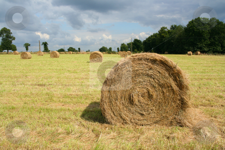 Round bale stock photo, Round bale of hay in a filed by Tilo