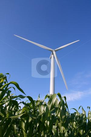 Wind turbine in a field stock photo, Wind turbines in a field of green corn, in summer. by Tilo