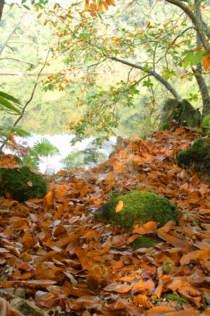 Autumn in the forest stock photo, Forest in Autumn with chestnuts on the ground by Tilo
