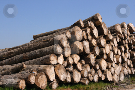Timber pile stock photo, Perspective of sawn trees (horizontal) by Tilo