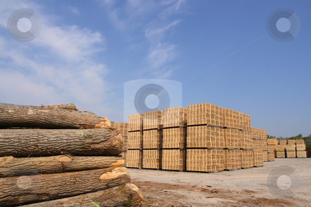 Wooden packing crates production stock photo, Sawn trees and wooden packing crates (horizontal) by Tilo