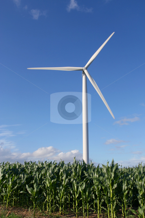 Wind turbine in a field stock photo, Wind turbines in a field of green corn, in summer. by Tilo