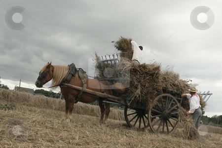 Vintage manual harvest scene stock photo, Vintage manual harvest, men working in a field by Tilo