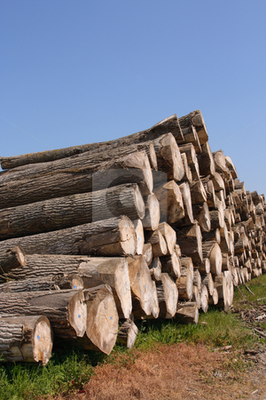 Timber pile stock photo, Perspective of sawn trees (vertical) by Tilo