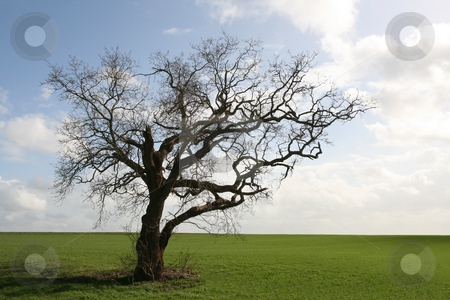 Gnarly old tree stock photo, Isolated in the countryside by Tilo