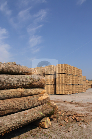 Wooden packing crates production stock photo, Sawn trees and wooden packing crates (vertical) by Tilo