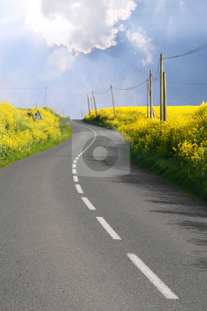 Through the rape fields stock photo, Curved road through overflowing rape fields by Tilo