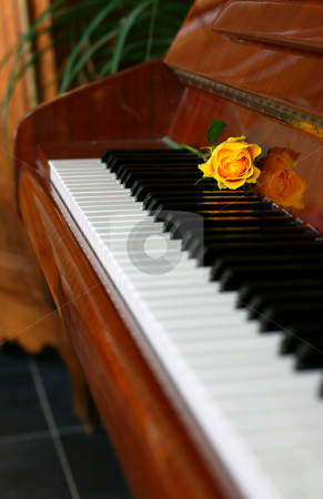 Classic piano stock photo, Yelow rose laying on the piano, focus on the rose by Tilo