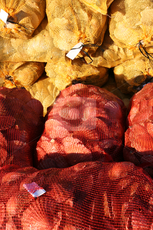 Scallop shells stock photo, Scallop shells in nets by Tilo