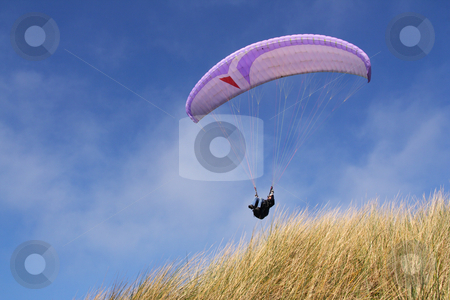 Purple paraglider stock photo, Purple paraglider passing over grass (horizontal) by Tilo