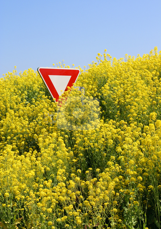 Stop GMO - Stop aux OGM stock photo, Overflowing rape field in Brittany - Champs de colza d?bordant sur la route en Bretagne by Tilo